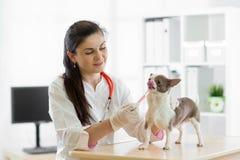 Vétérinaire donnant le chien de vaccination Image libre de droits