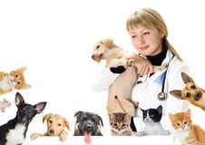 Vétérinaire et chien et chat de sourire Photo libre de droits