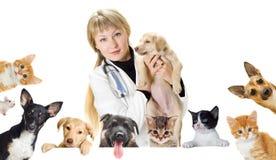 Vétérinaire et chien et chat de sourire Photos libres de droits