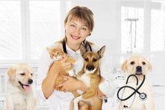 Vétérinaire et chiot et chaton dans la clinique Image stock
