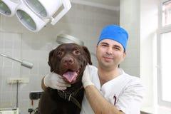 Vétérinaire et crabot. photos libres de droits