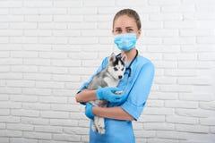 Vétérinaire examinant le petit chiot enroué Images libres de droits