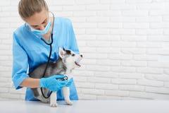 Vétérinaire examinant le petit chiot enroué Photographie stock libre de droits