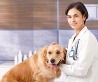 Vétérinaire féminin avec le crabot à la clinique Photos stock