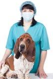 Vétérinaire féminin avec un crabot photo stock