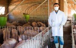 Vétérinaire masculin à la ferme de porc images stock