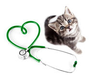 Vétérinaire pour le concept d'animaux familiers Image libre de droits