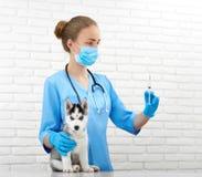 Vétérinaire professionnel et petit chiot enroué Photos stock