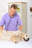 Vétérinaire professionnel examinant un chien photos libres de droits