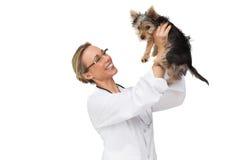 Vétérinaire retardant le chiot et le sourire de terrier de Yorkshire Images stock