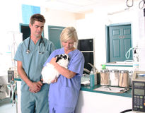 Vétérinaire retenant un lapin Photo stock