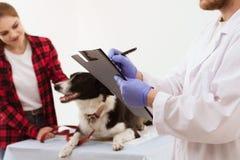 Vétérinaire tenant le presse-papiers obtenant le chien vérifié images stock
