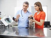 Vétérinaire vérifiant Weasel& x27 ; la température de s par la femme images libres de droits