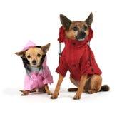 Vêtements de l'hiver Photographie stock