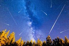 Vía láctea de los árboles de pino de las estrellas el caer fotos de archivo libres de regalías