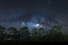 Vía láctea sobre árboles de pino Imagen de archivo libre de regalías