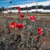 Vías y tren de ferrocarril Fotografía de archivo libre de regalías