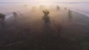 Vídeo aéreo de la cantidad de la mañana de niebla El volar sobre el río de Desna Tiempo de la salida del sol Región de Kyiv, Ucra almacen de video