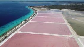 Vídeo aéreo de la opinión superior 4K UHD del abejón de sal de Rose del lago de la isla del Caribe de Bonaire