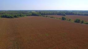 Vídeo aéreo de las tierras de labrantío