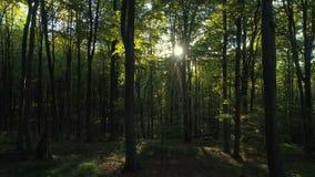 Vídeo aéreo de los árboles forestales del otoño en la montaña Fondos de madera verdes de la luz del sol de la naturaleza metrajes