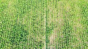 Vídeo aéreo de um campo de exploração agrícola filme
