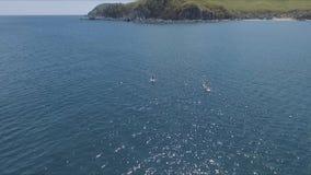 Vídeo aéreo del abejón del sorbo entre 2 hombres en aguas del Caribe tropicales almacen de metraje de vídeo