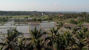 vídeo aéreo del abejón del vuelo 4K del campo del arroz por completo del agua Isla de Bali almacen de metraje de vídeo