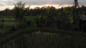 vídeo aéreo do voo 4K da paisagem da selva da floresta úmida no tempo do por do sol metragem do zangão 4K sem a edição Ilha de Ba filme