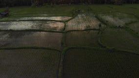 vídeo aéreo do voo 4K da paisagem da selva da floresta úmida no tempo do por do sol metragem do zangão 4K sem a edição Ilha de Ba vídeos de arquivo