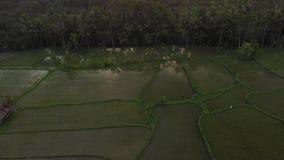 vídeo aéreo do voo 4K da paisagem da selva da floresta úmida no tempo do por do sol metragem do zangão 4K sem a edição Ilha de Ba video estoque