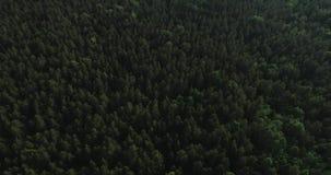 Vídeo aéreo - vuelo del abejón sobre bosque verde grande en Polonia, parque nacional, verano 2019 almacen de video