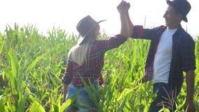 Vídeo agrícola elegante de la cámara lenta del concepto de la familia feliz del trabajo en equipo manos de la sacudida de la much almacen de metraje de vídeo