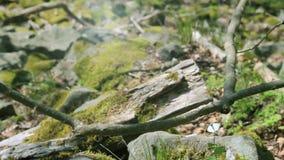 Vídeo: Bosque ventoso con la pequeña mariposa almacen de video