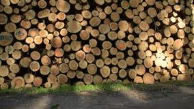Vídeo completo de HD - muy una gran cantidad de corte y de madera apilada del pino en bosque verde almacen de video