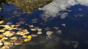 Vídeo con la reflexión de la hoja y de la montaña del otoño en el agua almacen de video