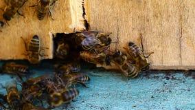 Vídeo da colmeia da abelha