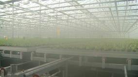 Vídeo da salada que cresce na estufa industrial video estoque
