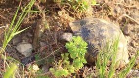 Vídeo da tartaruga do close-up video estoque