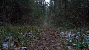 Vídeo de árboles caidos en el camino metrajes