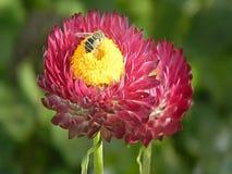 Vídeo de abejas en las flores almacen de metraje de vídeo