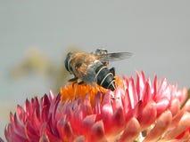 Vídeo de abejas en las flores almacen de video