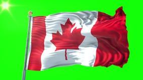 Vídeo de colocación inconsútil de la representación 3D de la bandera de Canadá El agitar hermoso del lazo de la tela del paño de  metrajes