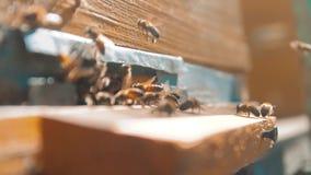 vídeo de la cámara lenta una forma de vida del enjambre de las moscas de abejas en una colmena recoge la miel del oso del polen a metrajes
