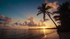 Vídeo de la salida del sol en los dilhouettes tropicales de la playa y de la palmera de la isla República Dominicana de Punta Can almacen de video