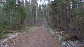 Vídeo de la tala de árboles en el bosque del pino almacen de metraje de vídeo