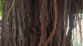 Vídeo de los prores del panorama del tronco de árbol almacen de video