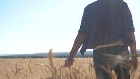 Vídeo de movimento lento de cultivo esperto dos trabalhos de equipe Trabalho do fazendeiro no campo de trigo O fazendeiro explora filme