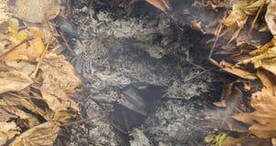 Vídeo de Timelapse de uma folha ardente do carvalho que aumenta das cinzas de uma pilha grande das folhas e dos galhos no outono  filme