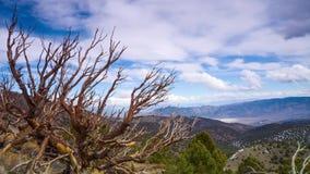Vídeo de Timelapse de los pinos de Bristlecone almacen de video